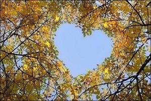 mariage laique touraine - coeur feuilles automne